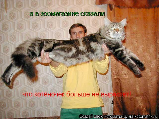 Котоматрица: а в зоомагазине сказали  что котёночек больше не вырастет!