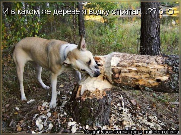 Котоматрица: И в каком же дереве я водку спрятал...?? о_О