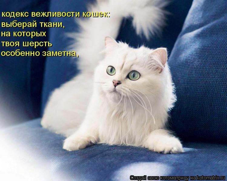 Котоматрица: кодекс вежливости кошек: выберай ткани,  на которых твоя шерсть особенно заметна,