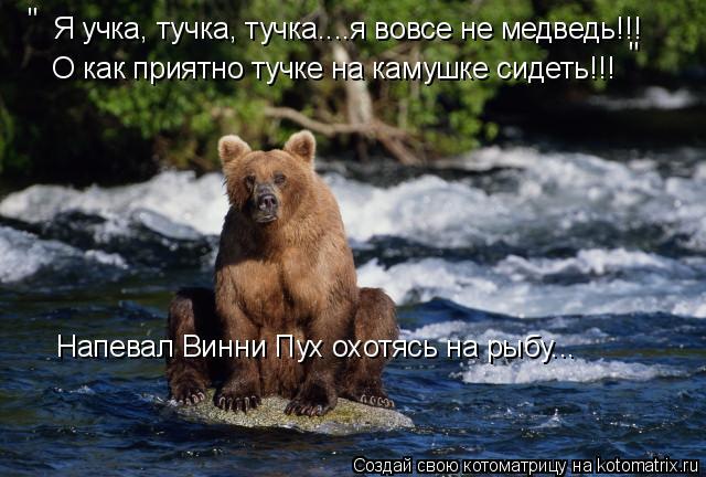 """Котоматрица: Я учка, тучка, тучка....я вовсе не медведь!!! О как приятно тучке на камушке сидеть!!! """" """" Напевал Винни Пух охотясь на рыбу..."""