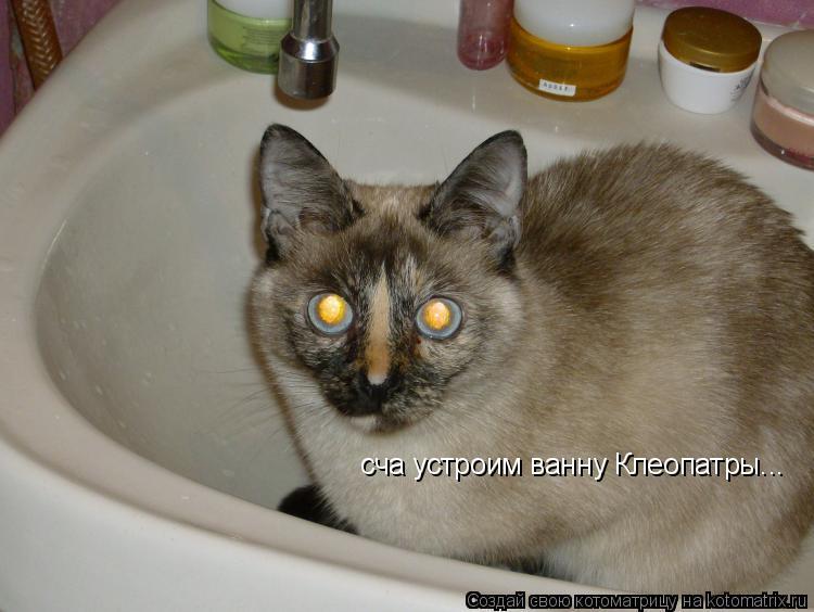 Котоматрица: сча устроим ванну Клеопатры...
