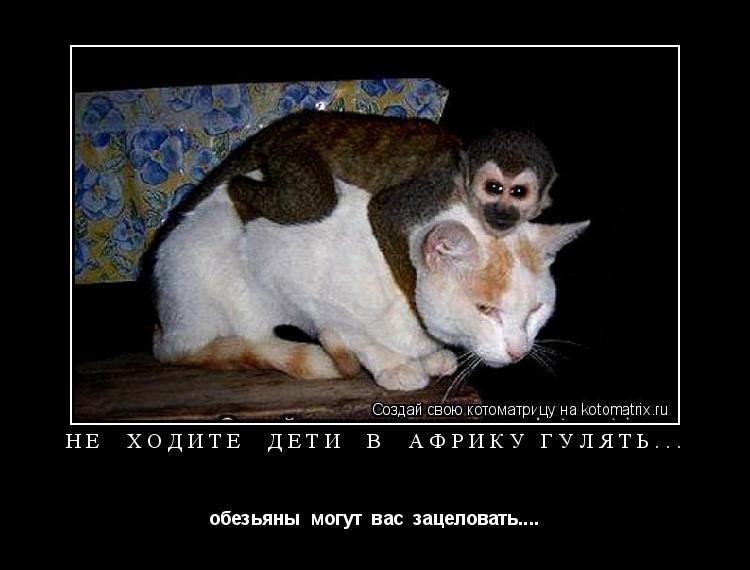 Котоматрица: не  ходите  дети  в  Африку гулять... обезьяны  могут  вас  зацеловать....