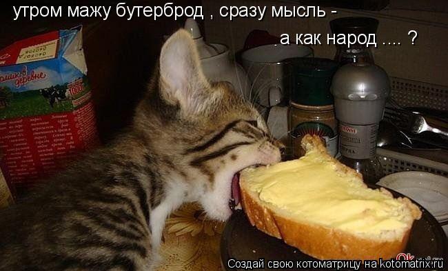 Котоматрица: утром мажу бутерброд , сразу мысль - а как народ .... ?