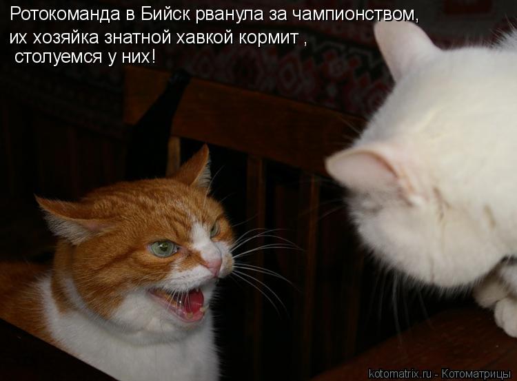 Котоматрица: Ротокоманда в Бийск рванула за чампионством, их хозяйка знатной хавкой кормит ,   столуемся у них!