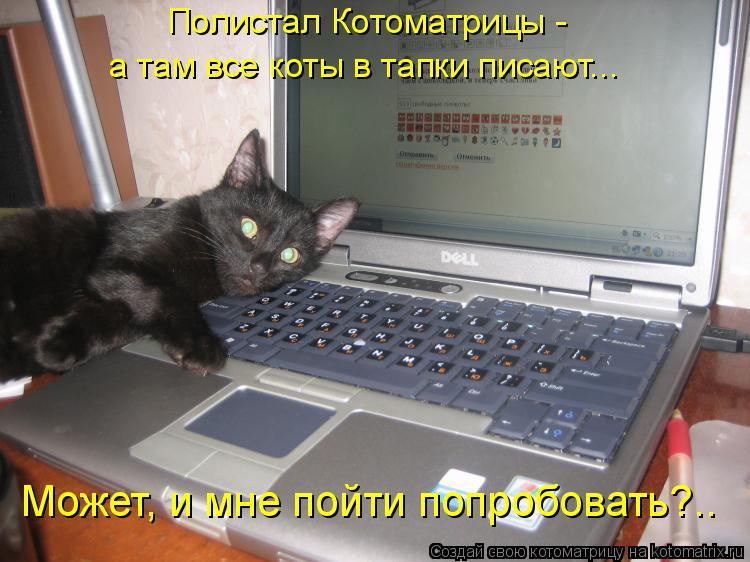 Котоматрица: Полистал Котоматрицы -  а там все коты в тапки писают... Может, и мне пойти попробовать?..