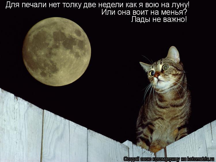 Котоматрица: Для печали нет толку две недели как я вою на луну! Или она воит на менья? Лады не важно!