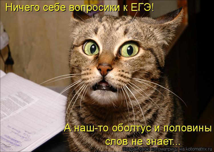 Котоматрица: Ничего себе вопросики к ЕГЭ! А наш-то оболтус и половины  слов не знает...