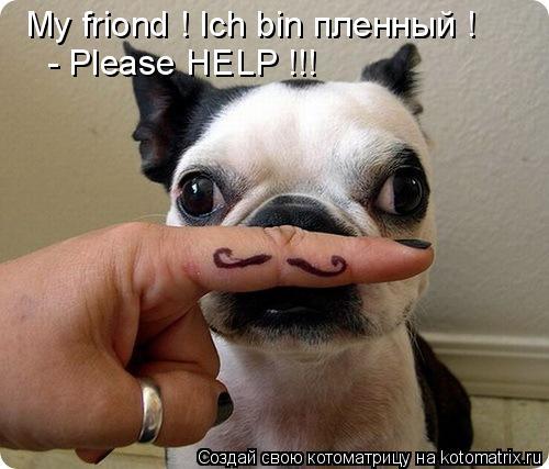 Котоматрица: My friond ! Ich bin пленный ! - Please HELP !!!