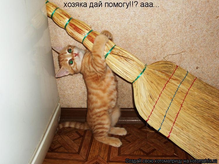 Котоматрица: хозяка дай помогу!!? ааа...