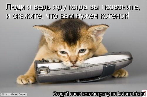 Котоматрица: Люди я ведь жду когда вы позвоните,  и скажите, что вам нужен котенок!