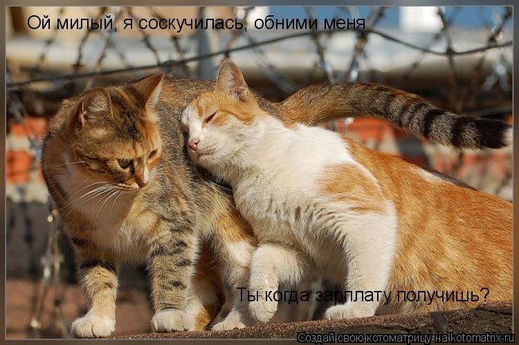 Котоматрица: Ой милый, я соскучилась, обними меня Ты когда зарплату получишь?