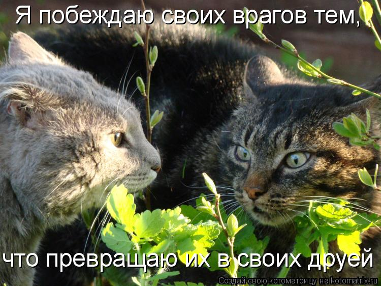 Котоматрица: Я побеждаю своих врагов тем, что превращаю их в своих друей