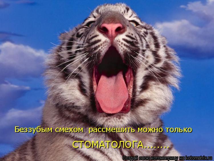 Котоматрица: Беззубым смехом  рассмешить можно только  СТОМАТОЛОГА........