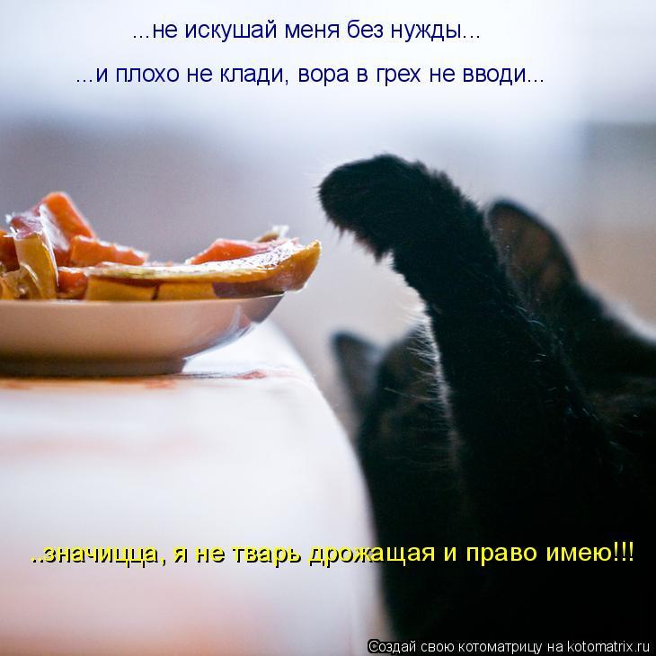 Котоматрица: ...не искушай меня без нужды... ...и плохо не клади, вора в грех не вводи... ..значицца, я не тварь дрожащая и право имею!!!