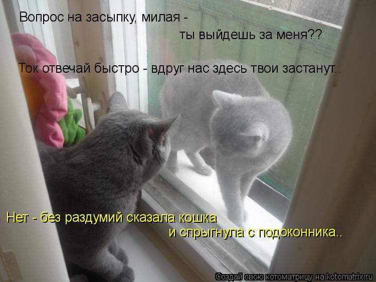 Котоматрица: Вопрос на засыпку, милая -  ты выйдешь за меня?? Ток отвечай быстро - вдруг нас здесь твои застанут.. Нет - без раздумий сказала кошка  и спрыгну