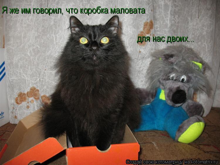 Котоматрица: Я же им говорил, что коробка маловата для нас двоих Я же им говорил, что коробка маловата для нас двоих...