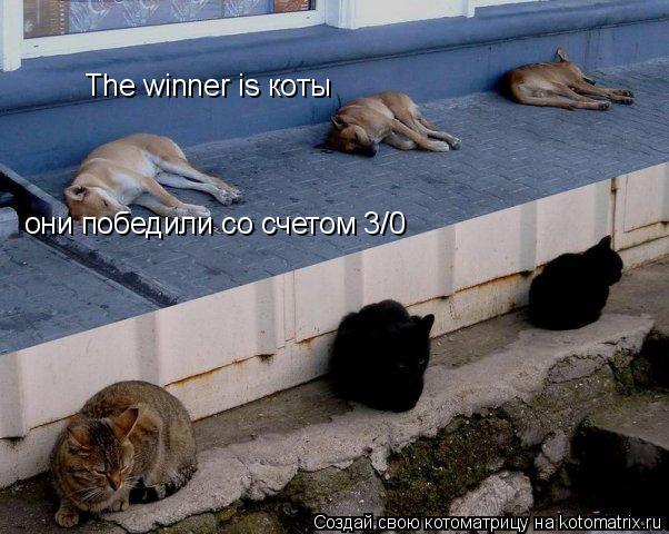 Котоматрица: The winner is коты они победили со счетом 3/0