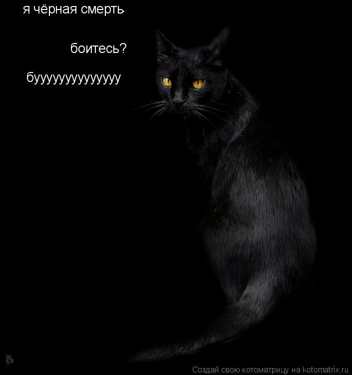 Котоматрица: я чёрная смерть . боитесь? буууууууууууууу