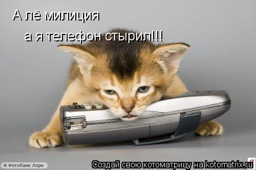 Котоматрица: А лё милиция  а я телефон стырил!!!
