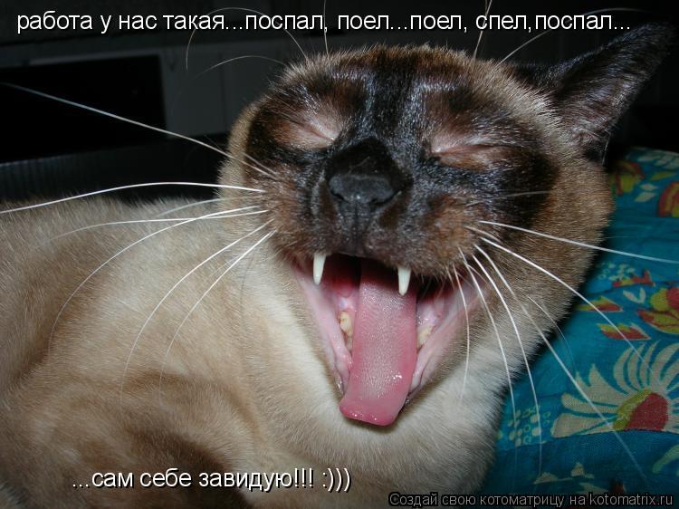 Котоматрица: работа у нас такая...поспал, поел...поел, спел,поспал... ...сам себе завидую!!! :)))