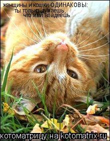 Котоматрица: женщины и кошки ОДИНАКОВЫ:  ты только думаешь, что ими владеешь