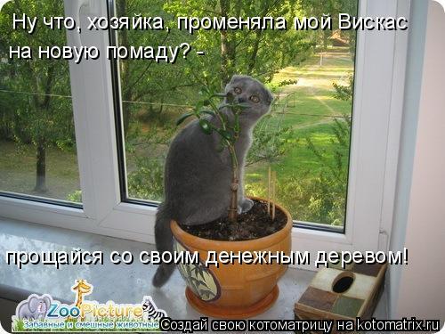 Котоматрица: Ну что, хозяйка, променяла мой Вискас на новую помаду? -  прощайся со своим денежным деревом!