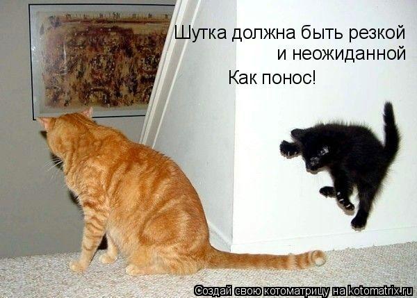 Котоматрица: Шутка должна быть резкой  и неожиданной Как понос!