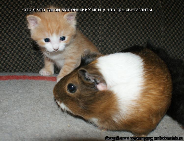 Котоматрица: -это я что такой маленький? или у нас крысы-гиганты.