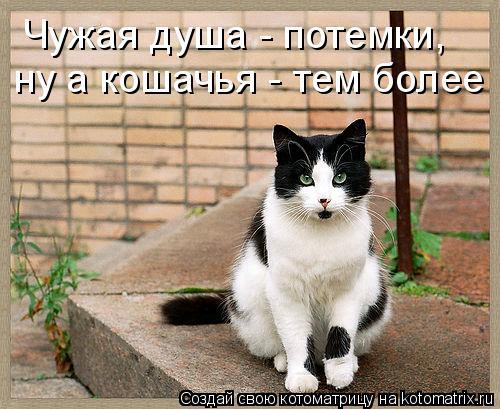 Котоматрица: Чужая душа - потемки, ну а кошачья - тем более