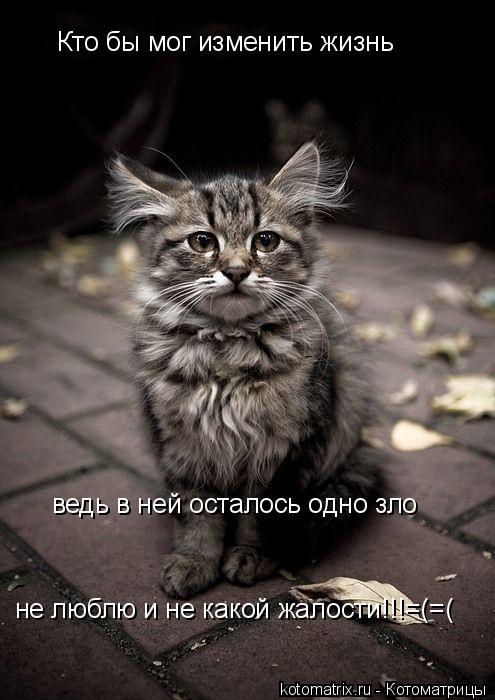 Котоматрица: Кто бы мог изменить жизнь ведь в ней осталось одно зло не люблю и не какой жалости!!!=(=(