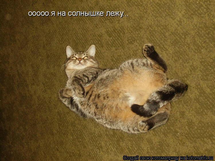 Котоматрица: ооооо.я на солнышке лежу...