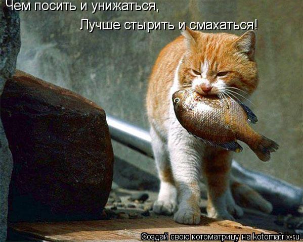 Котоматрица: Чем посить и унижаться,  Лучше стырить и смахаться!