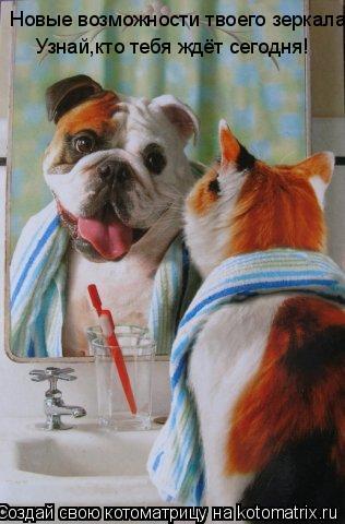 Котоматрица: Новые возможности твоего зеркала! Узнай,кто тебя ждёт сегодня!  Узнай,кто тебя ждёт сегодня!