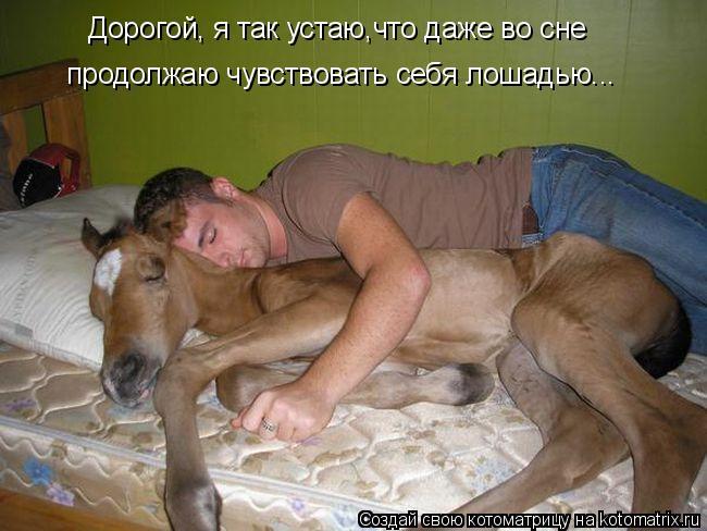 Котоматрица: Дорогой, я так устаю,что даже во сне продолжаю чувствовать себя лошадью...