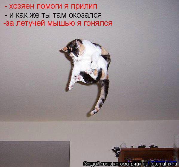 Котоматрица: - хозяен помоги я прилип - и как же ты там окозался -за летучей мышью я гонялся