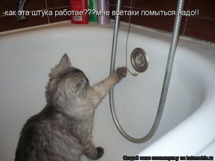 Котоматрица: -как эта штука работае???мне всётаки помыться надо!!