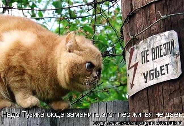 Котоматрица: Надо Тузика сюда заманить,этот пёс житья не дает...