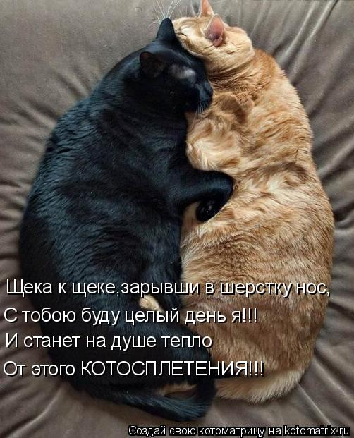 Котоматрица: Щека к щеке,зарывши в шерстку нос, С тобою буду целый день я!!! И станет на душе тепло От этого КОТОСПЛЕТЕНИЯ!!!