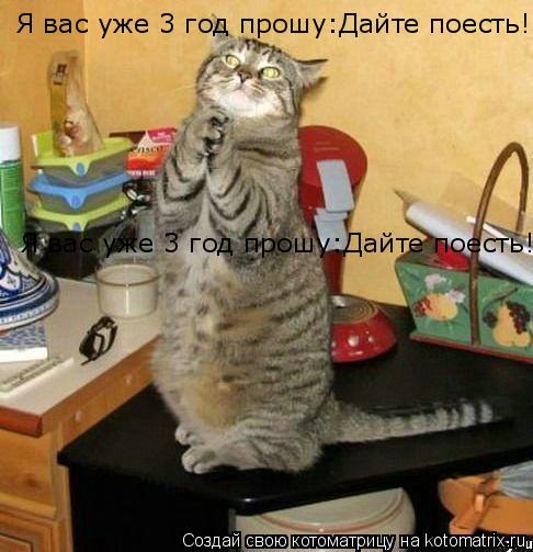 Котоматрица: Я вас уже 3 год прошу:Дайте поесть! Я вас уже 3 год прошу:Дайте поесть!