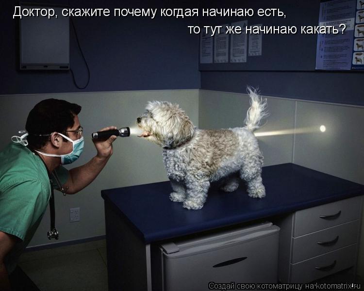 Котоматрица: Доктор, скажите почему когдая начинаю есть, то тут же начинаю какать?