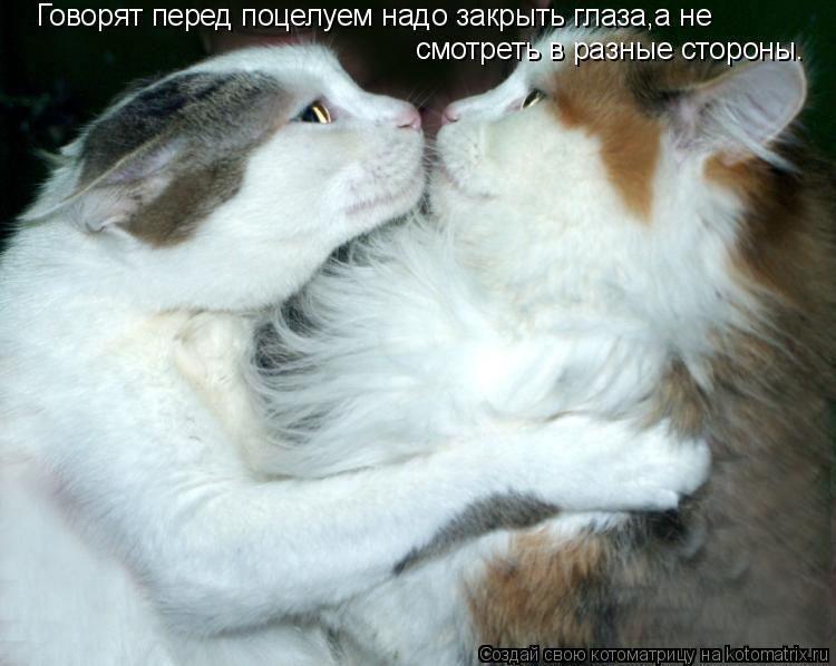 Котоматрица: Говорят перед поцелуем надо закрыть глаза,а не  смотреть в разные стороны.