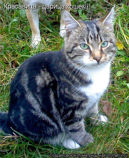 Котоматрица: Красавица - царица кошек!!!