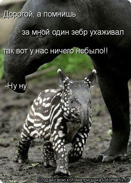 Котоматрица: за мной один зебр ухаживал Дорогой, а помнишь  так вот у нас ничего небыло!! -Ну ну