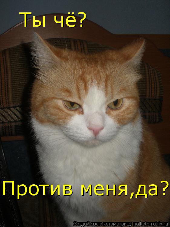 Котоматрица: Ты чё? Против меня,да?