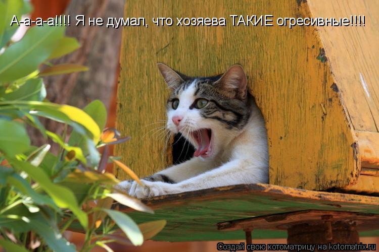 Котоматрица: А-а-а-а!!!! Я не думал, что хозяева ТАКИЕ  А-а-а-а!!!! Я не думал, что хозяева ТАКИЕ огресивные!!!!