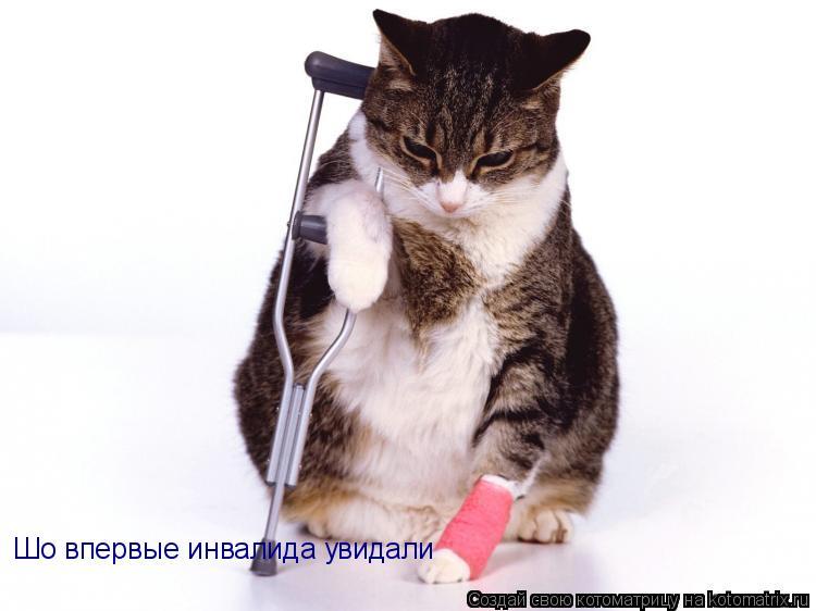 Котоматрица: Шо впервые инвалида увидали