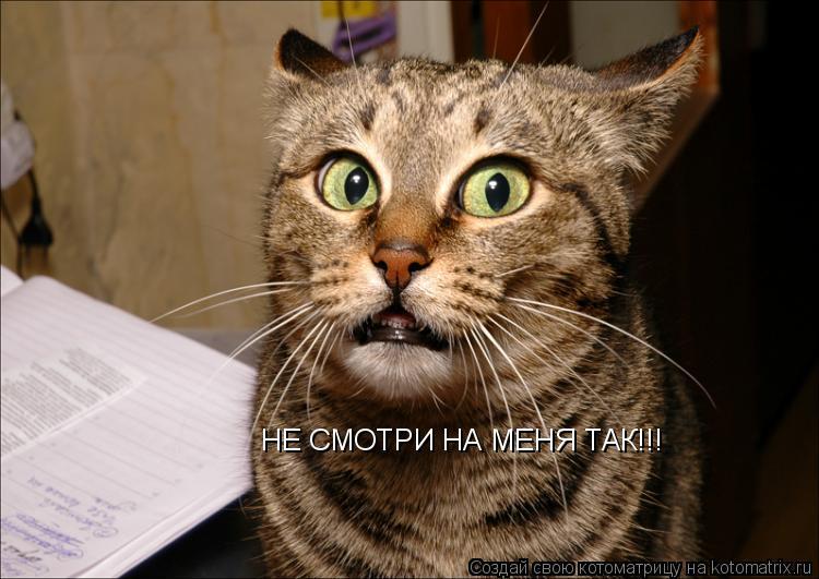 Котоматрица: НЕ СМОТРИ НА МЕНЯ ТАК!!!