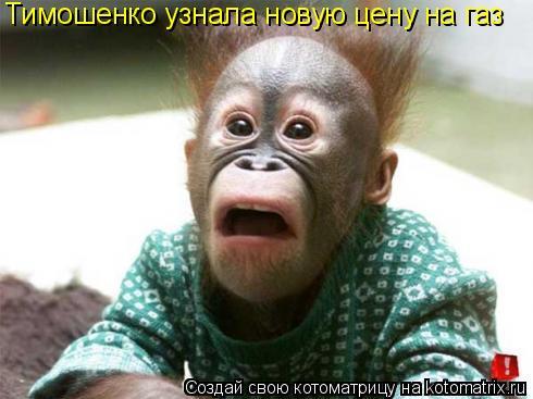 Котоматрица: Тимошенко узнала новую цену на газ