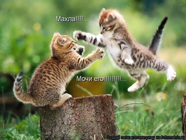 Котоматрица: Махла!!!!.. Мочи его!!!!!!!!!...