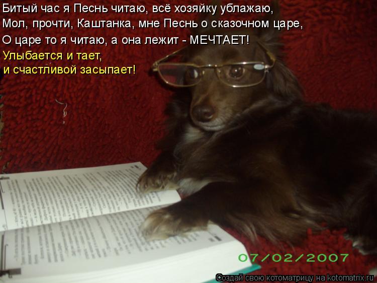 Котоматрица: Мол, прочти, Каштанка, мне Песнь о сказочном царе, и счастливой засыпает! Улыбается и тает,  О царе то я читаю, а она лежит - МЕЧТАЕТ! Битый час